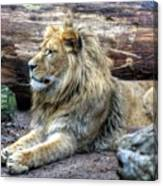 Hannover Zoo Germany Canvas Print