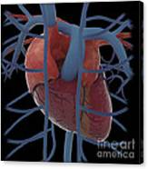3d Rendering Of Human Heart Canvas Print