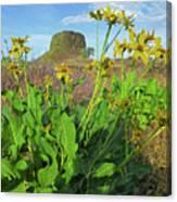 3da5792-dc Arrowleaf Balsamroot Framing Hat Rock Canvas Print