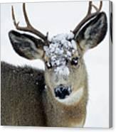 3x3 Mule Deer Buck-signed-#8800 Canvas Print