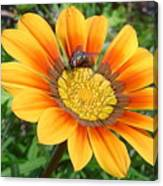 Australia - Fly Feeding On Pollen Canvas Print