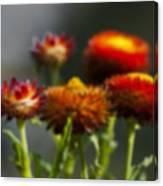 Blurred Seasonal Flower With Dark Background Canvas Print