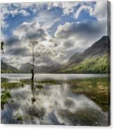 Buttermere Tree Canvas Print