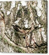 Detail Of Brich Bark Texture Canvas Print