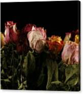 Dried Roses Canvas Print