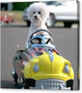 Fifi Goes For A Ride Canvas Print