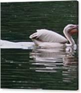 Fishing Pelican Canvas Print