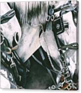 4 Grays Canvas Print