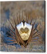 Greater Sage-grouse Canvas Print