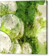 Green Grapes Close Up In Napa Valley Ready To Be Made Into Wine Canvas Print
