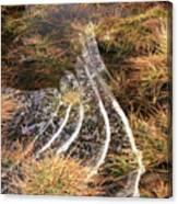 4. Ice Prismatics In Grass 1, Loch Tulla,  Canvas Print