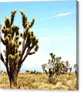 Joshua Tree Desert Canvas Print