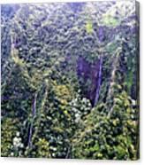 Kauai Water Fall Canvas Print