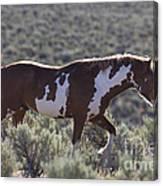 Mustang Stallion Canvas Print