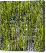 Nature Scenes Around Hunting Island South Carolina Canvas Print