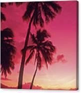 Palms Against Pink Sunset Canvas Print