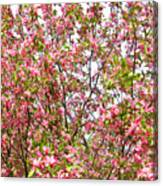 Pink Cherry Tree Canvas Print