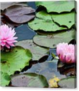 Pink Water Lily Series Canvas Print