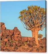 Quiver Tree Forest - Namibia Canvas Print