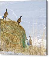 4 Roosters And A Hen Canvas Print
