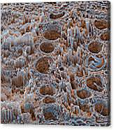 Rotten Oak Wood, Sem Canvas Print