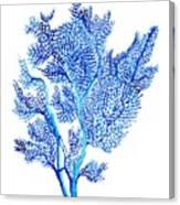 Sea Fan Canvas Print