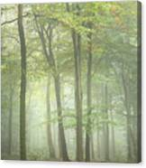 Stunning Colorful Vibrant Evocative Autumn Fall Foggy Forest Lan Canvas Print