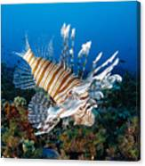 Underwater Close-up Canvas Print
