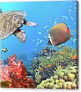 Underwater Panorama Canvas Print