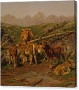 Weaning The Calves Canvas Print