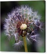 Weed Seeds Canvas Print