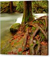 Whatcom Creek Canvas Print