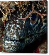 White Spotted Eel Canvas Print