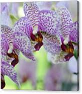 Orchids Canvas Print