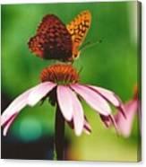 #416 14a Butterfly Fritillary, Coneflower Lunch Break Good Till The Last Drop Canvas Print