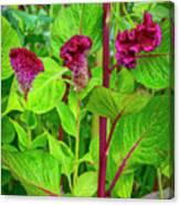 4398- Flowers Canvas Print