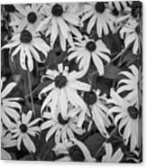 4400- Daisies Black And White Canvas Print