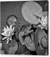 4432- Lily Pads Black And White Canvas Print