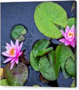 4432- Lily Pads Canvas Print