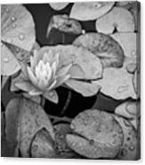 4434- Lily Pads Black And White Canvas Print
