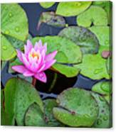 4434- Lily Pads Canvas Print