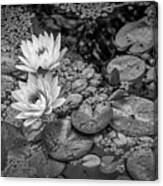 4445- Lily Pads Black And White Canvas Print