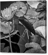 4466- Lily Pads Black And White Canvas Print