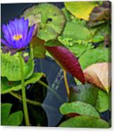 4466- Lily Pads Canvas Print
