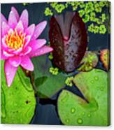 4475- Lily Pads Canvas Print