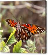 4529 - Butterfly Canvas Print