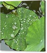 4634- Lilypad Canvas Print