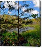 49- Florida Everglades Canvas Print