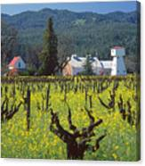 4b6394 Mustard In The Vineyards Canvas Print