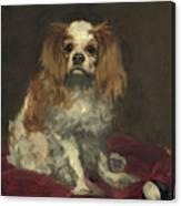 A King Charles Spaniel Canvas Print